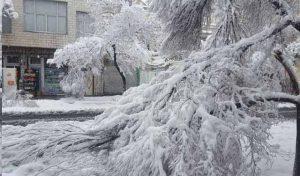 افتادن درختان در معابر و خیابان های شهر تهران در پی بارش سنگین برف